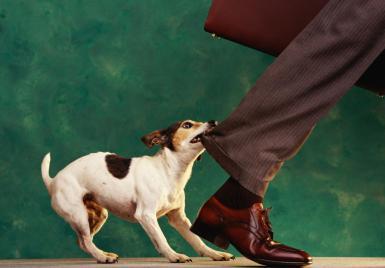 dog biting man's leg